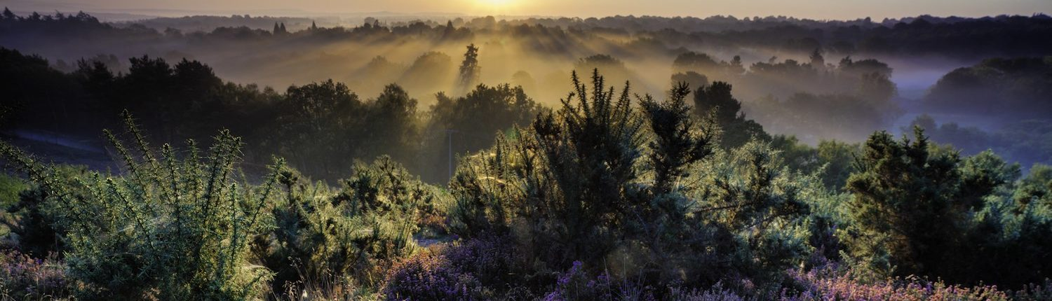 Dawn In The Surrey Hills Print by ChromaLuxe Printer